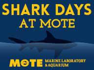 Shark Days at Marine Laboratory & Aquarium