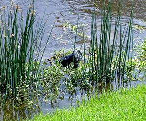 What is that thing? Sarasota wildlife
