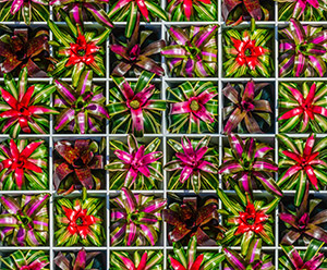 Warhol: Flowers in the Factory at Selby Gardens Feb. 11 – June 30