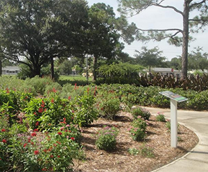 Blooming Beauties: Top Garden Spots in Sarasota
